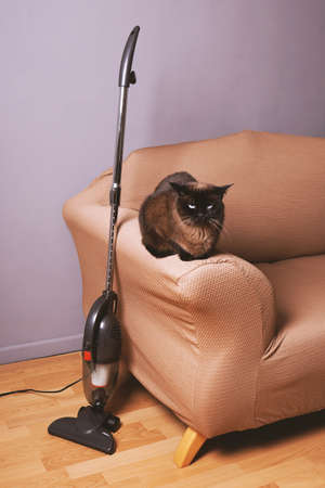 upright bagless vacuum cleaner standing next to cat on sofa in domestic living room 版權商用圖片