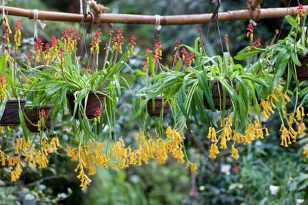 asien: Asien flowers hanging from the top Stock Photo