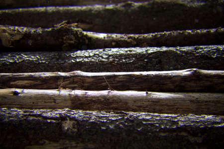 bark rain tree: wet wooden planks