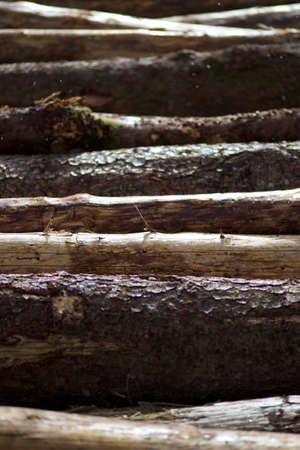blanks: Wooden blanks in rain