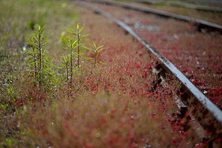 disused: Disused railway