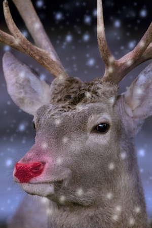nariz roja: Rudolph the red nose reindeer