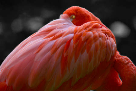 vigilant: Flamingo Stock Photo