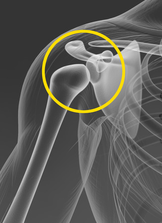 Shoulder joint, medically 3D artwork, x-ray view, illustration