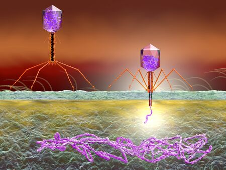 3D Illustration showing bacteriophage attacking E. coli bacteria and injecting DNA Banco de Imagens