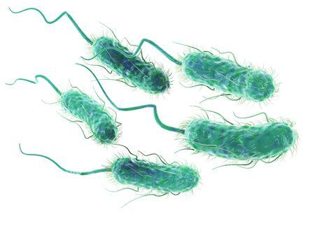 3D Illustration showing Escherichia coli bacteria (E. coli)