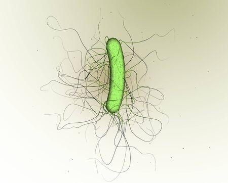 3D illustration showing a single clostridium difficile bacteria 版權商用圖片