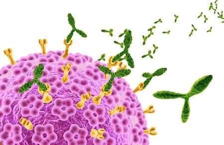 Human papillomavirus HPV marked by antibodies