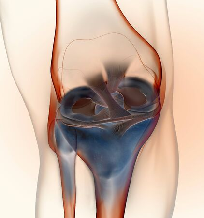 3D illustration showing knee joint with transparent femur and articular capsule, menisci and ligaments on blue backgound