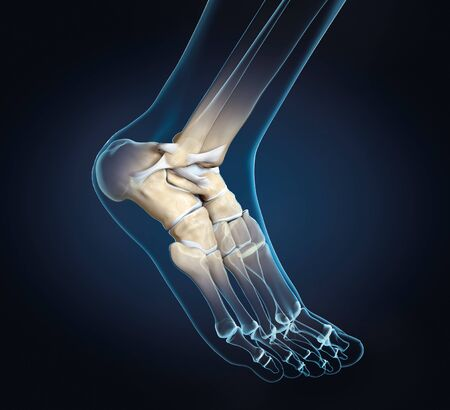 3D illustration showing of a ankle joint with bones, ligaments and articular capsule 版權商用圖片