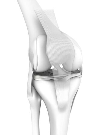 3D illustration showing knee joint with femur, tibia, articular capsule, menisci and ligaments, medical mock up on white background
