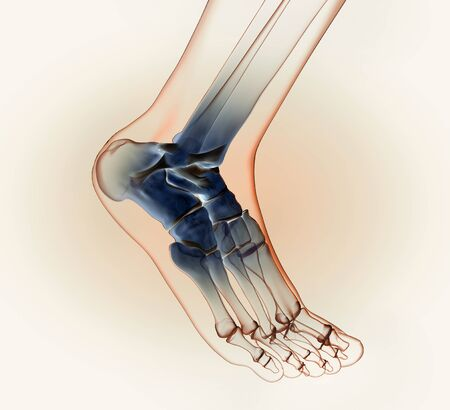 3D illustration showing of a ankle joint with bones, ligaments and articular capsule