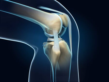 3D illustration showing anatomy of a knee joint with transparent femur and articular capsule, menisci and ligaments