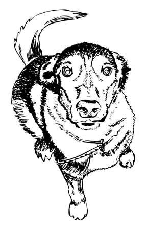 mongrel: Dog, man s best friend