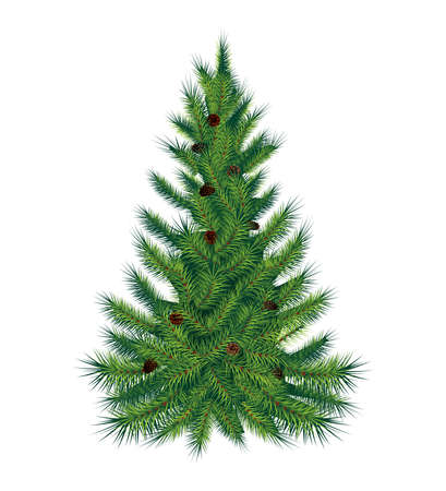Single pine tree, isolated on white background. Vector illustration. High quality