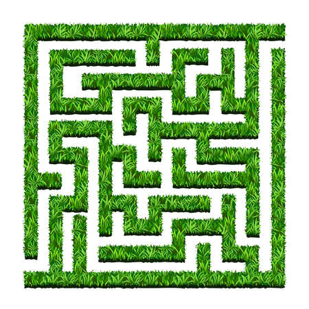 Maze of green bushes, labyrinth garden. Vector illustration. Isolated on white background