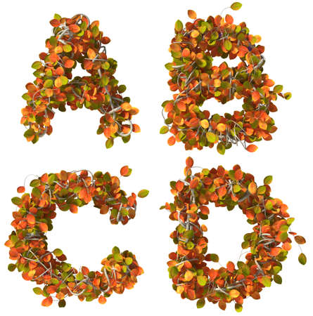 Alphabet of autumn trees  Letters isolated on white background  Added clipping path  A,B,C,D photo
