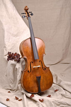 A cello in beige background photo