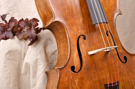 Detail of the cello Stockfoto