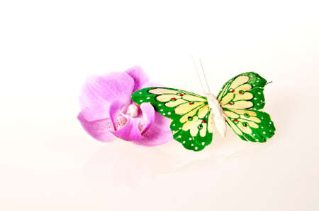Orchid with a butterfly on white background Stock Photo