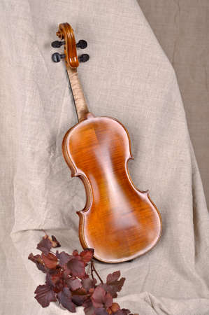 Violin back view isolated on beige background photo