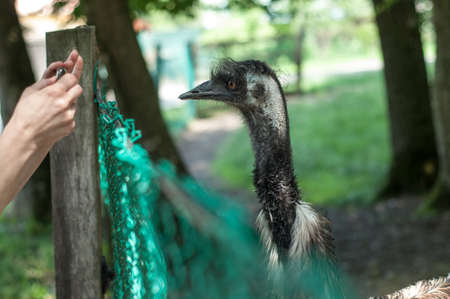 Ostrich standing in a zoo