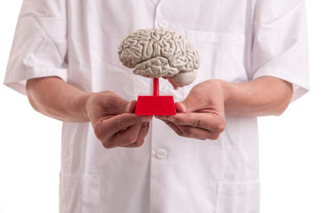 Young doctor with brain model in his hands photo