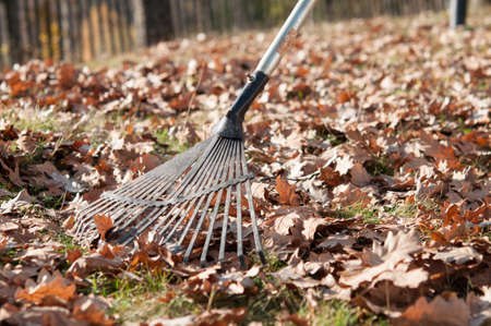 Cleaning with rake of autumn leaves in park photo