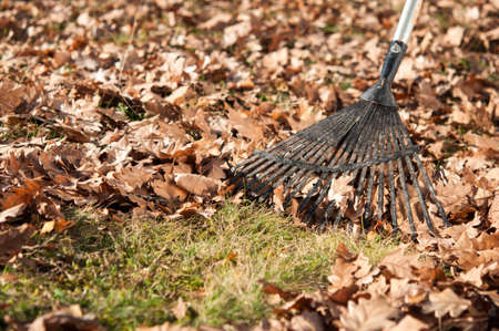 Cleaning with rake of autumn leaves in park Stockfoto