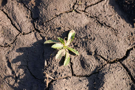 small leaf growing on cracked earth. new life into dry soil and rigid photo