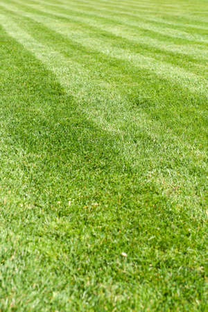 sports field: Natural green grass field background, fresh cut