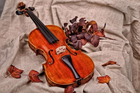 necking: Isolated violin and autumn leaves on brown background