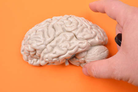 cerebra: preparation of taking pictures of a 3D human brain model from external on orange background Stock Photo