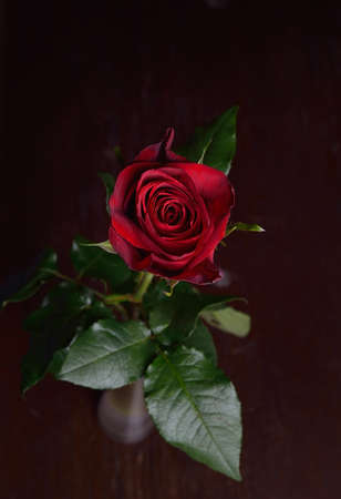 Photo of a red rose in vase on brown wooden table. Perfection of nature. Purity