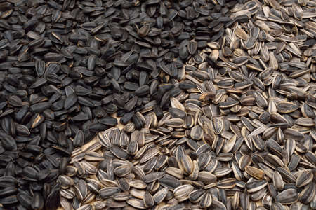 Pile of half dried striped sunflower seeds and half black as background. Healthy eating