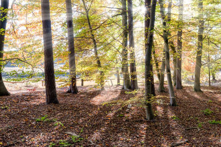 heathland: HALTERN, GERMANY - OCTOBER 31, 2016: Westruper Heide - Scenic forest with sun beams shining through the trees.