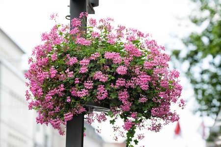 NEUSS, GERMANY - AUGUST 08, 2016: Flowers decorate lantern posts along a shopping street Sajtókép