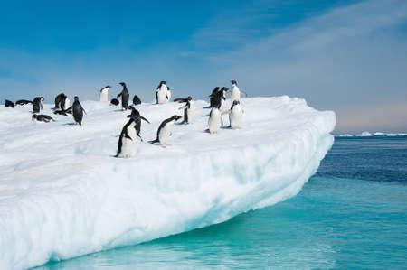 Dieser Schuss wurde während der Expedition in die Antarktis im Januar 2012 gemacht Standard-Bild
