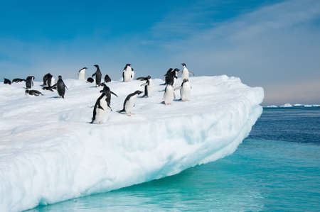 This shot was made during expedition to Antarctica in January 2012  Stock Photo - 15525975