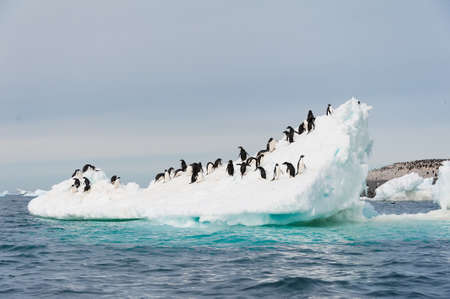 This shot was made during expedition to Antarctica in January 2012 Stock Photo - 15525983