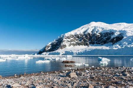 paradise bay: Gentoo penguins colony in Paradise bay, Antarctica Stock Photo
