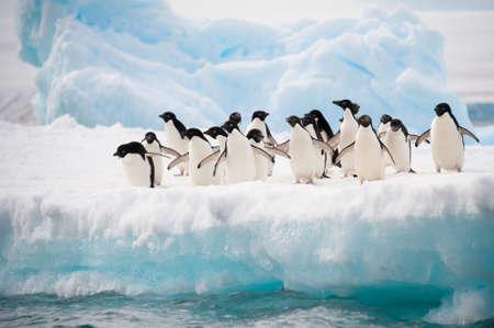 Manchots Adélie colonie sur l'Antarctique iceberg Banque d'images
