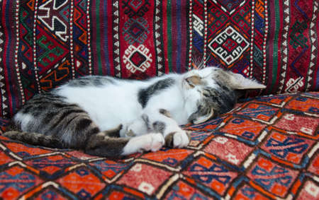 rug texture: Tiny kitten on colorful red turkish carpet Stock Photo