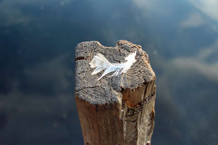 Close up peaceful feather on the wooden stick stand in the water Stock Photo