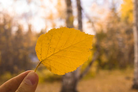 Hand holds yellow leaf on sky background. Autumn season composition in park.