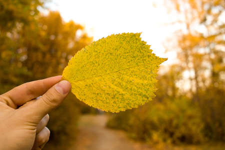 Man hand holding yellow leaf on sky and trees background. Autumn time season composition in park. Imagens