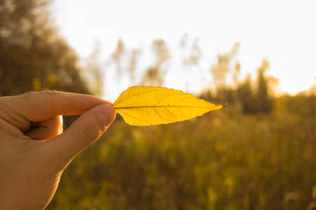 Hand holding yellow leaf on field background. Autumn time season composition in forest.