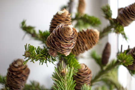 Christmass tree branches. Close-up photo. Christmass and New year concept. Stock Photo