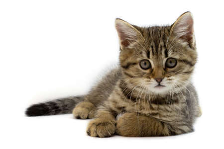 Portrait of cute baby tabby kitten isolated on white background. Kid animals and adorable cats concept Imagens