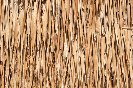 Texture of dried coconut leaves that overlap pile. Abstract background of dried coconut leaves. Фото со стока